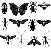 stock photo of lightning bugs  - Insect silhouettes in vector including bee roach ant earwig moth butterfly and dragonfly - JPG