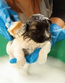Puppy Dog In Bath Tub