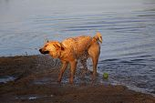 Wet Cross Breed Dog Shakes Himself Dry 2