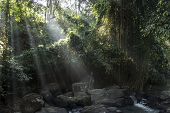 Sunlights In Jungle