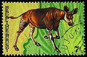 Republic Of Burundi - Circa 1970:  Printed In Republic Of Burundi Shows  Animals, Series, Circa 1970