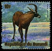 Burundi - Circa 1964: A Stamp Printed In Burundi Shows Image Of A Animal Of Burundi, Circa 1964