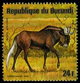 Republic Of Burundi - Circa 1975: A Stamp Printed In Republic Of Burundi Shows White-tailed Gnu, Ser