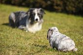 Dog Versus Rabbit