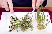 Grow your own Dinner