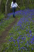 Rear view of woman walking in bluebell woods