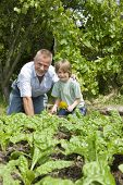 Portrait of happy young boy with grandfather gardening in community garden