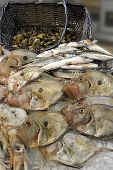 stock photo of faber  - John Dory on a fishmonger - JPG