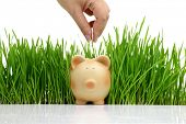 Hand deposit money in piggy bank with grass background