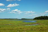 image of wetland  - Wetlands in summer - JPG