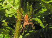 Spider On A Stem