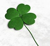 stock photo of clover  - a green four - JPG