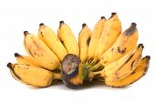 pic of festering  - Vietnamese yellow golden banana on white background