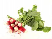 Bunch Of Freshly Picked Radish.