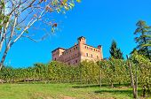 Vineyards of Grinzane Cavour among on the downhill under clear blue sky in Piedmont, Northern Italy.