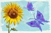 Sunflowers And  Butterfly Watercolors