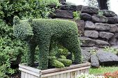 Rome.Evergreen shaped she-wolf