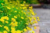 Yellow Flower At Sidewalk
