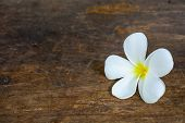 White Flower On Old Wood