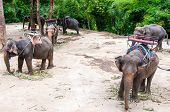 Elephants Waiting To Start The Tours With Tourists In Kanchanaburi, Thailand.