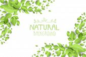Eco backdrop with green leaves. Place for text