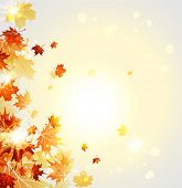 Background with maple autumn leaves. Natural background with place for text