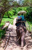 Elephant Trekking Through Jungle In Kanchanaburi, Thailand