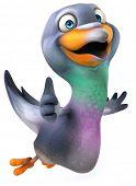 foto of pigeon  - Pigeon - JPG