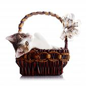 Kitten In A Wattled Basket With A Bow.