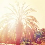Palm trees with instagram effect