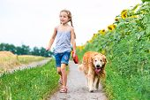 little girl walks on the leash with a golden retriever in field