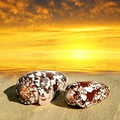 Conch shells on beach in the sunset