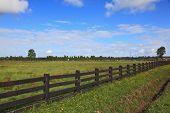 Steady herbal farmer's field, fenced low wooden fence