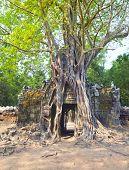 Tropical tree on Ta Som, Angkor wat in Siem Reap,Cambodia