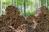 Firewood In Forest