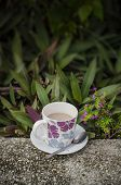 Coffee In Garden
