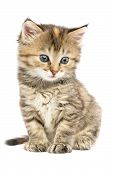 Striped Kitten Sitting With Astonishment Looks In The Side Down