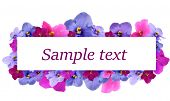 Beautiful saintpaulia flowers and card with space for your text isolated on white