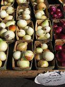 Onions 12