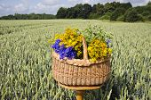 Midsummer Still-life With Basket And Medical Herbs  On Wheat Field