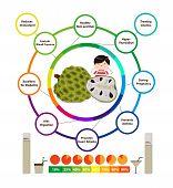 Amazing Health Benefits of Custard Apple