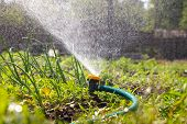 stock photo of sprinkler  - Watering garden equipment  sprinkler hose for irrigation plants - JPG