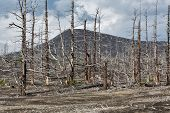 Lifeless Desert Landscape Of Kamchatka Peninsula: Dead Wood (tolbachik Volcano Lava Field)