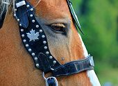 Close up portrait of horse with bridle