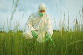 Scientist Examining Green Plants On Summer Field