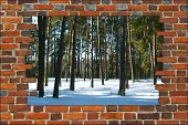 Broken Brick Wall And View To Winter Forest