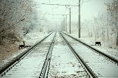 Urban Railroad At Winter Day