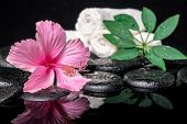 Spa Concept Of Delicate Pink Hibiscus, Green Leaf Shefler With Drops And White Stacked Towels On Zen