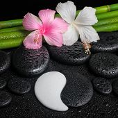 Spa Setting Of White, Pink Hibiscus Flowers, Symbol Yin Yang  And Natural Bamboo On Zen Basalt Stone