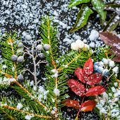 Winter Christmas Card Of Evergreen Branches, Red Leaves And Berry With Snow, Closeup